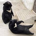 Лунный медведь напал на группу японских туристов