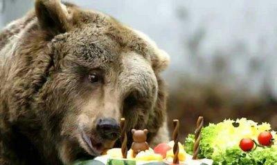 Обед белого медведя