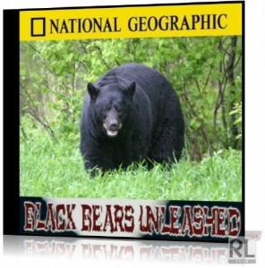 Черные медведи Тайваня / Black bears unleashed