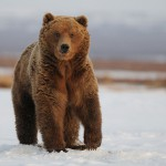 Питание медведей