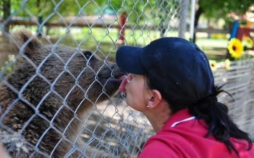 Животные в Геленжике (2)