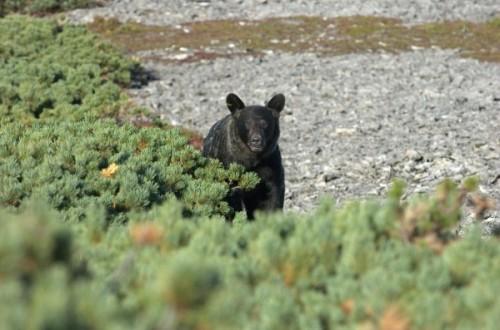 Как вести себя при встрече с медведем 2