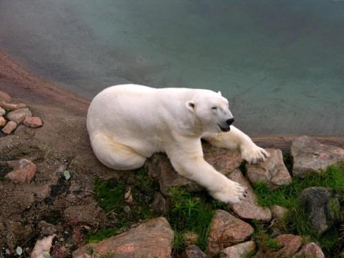 Как перевоплотиться в медведя? 3
