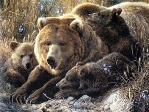 Медведи, обитающие на территории России