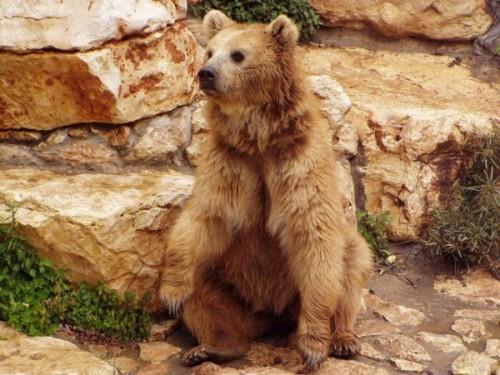 Медведи: что мы знаем о них3