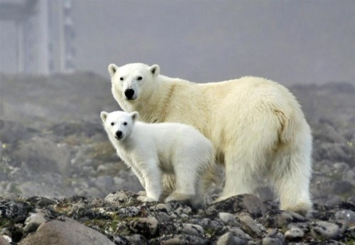 Медвежий быт1