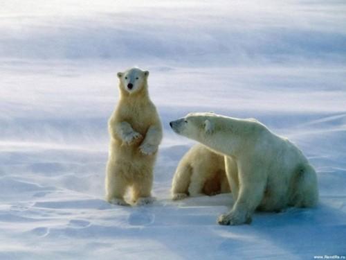 Медвежий мир3