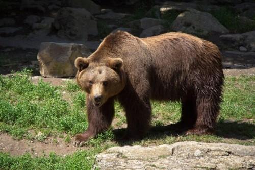 Посещение зоопарков в отпуске