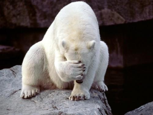 Разновидности медведей на территории Российской Федерации3