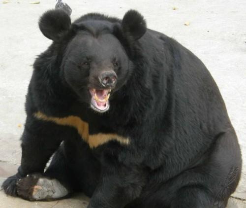 Где можно встретить очковых медведей25