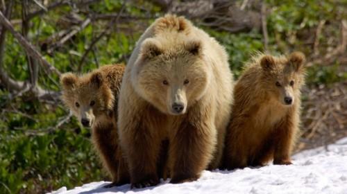 Оригинальный представитель отряда хищников - медведь3