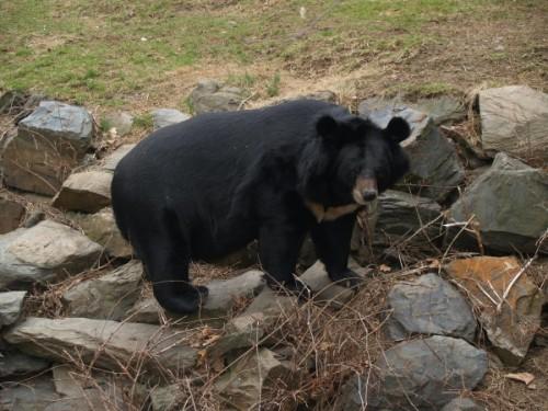 Особенности характера медведя: преувеличенная опасность.1