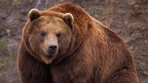 Правила поведения при встрече с медведем1