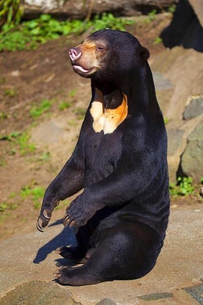 Солнечный медведь 3