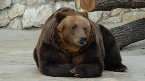 Чем питаются медведи планеты Земля.1