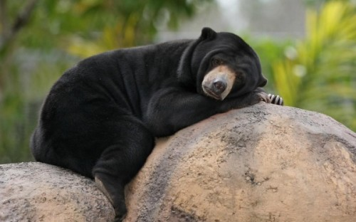 Медведь ростом с третьеклассника