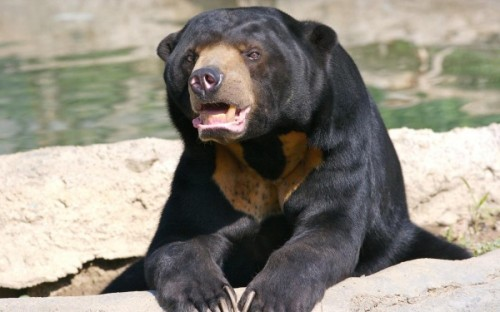 Медведь ростом с третьеклассника2