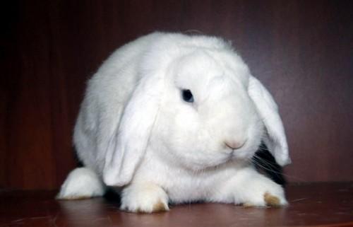 Декоративные кролики 2