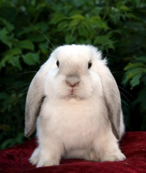 Декоративные кролики 3