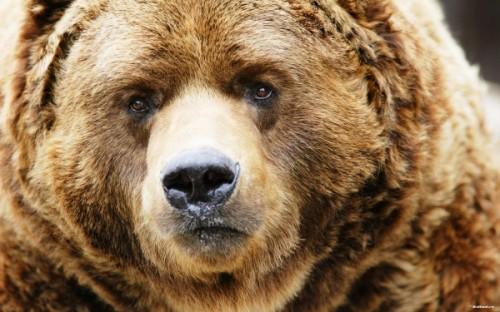 Медведи не только бурые бывают