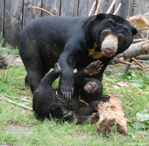 Самый маленький медведь на свете3
