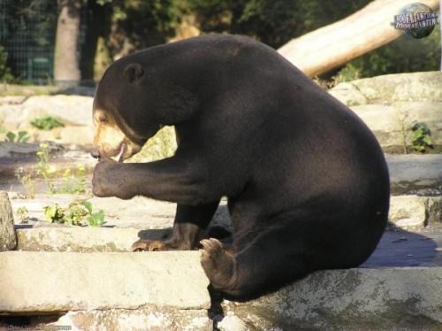 Медовые медведи3