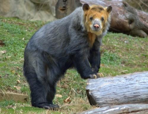 О медведях знать хочу, кто меня научит…2