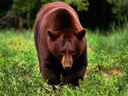 Вопросы о медведях в ЕГЭ4