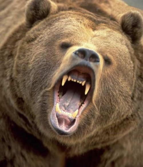 Интересные факты о медведях5