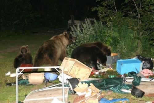 при встрече с медведем 1