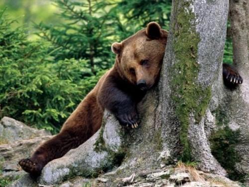 Медведь - это всеядное животное.