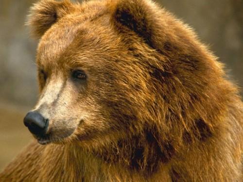 Медведь - это всеядное животное.3