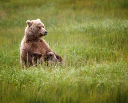 Медведь – один из символов России для иностранцев4
