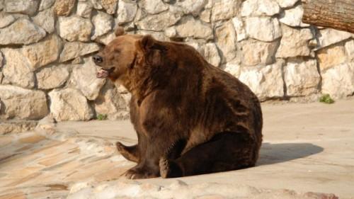 Медведи в неволе4