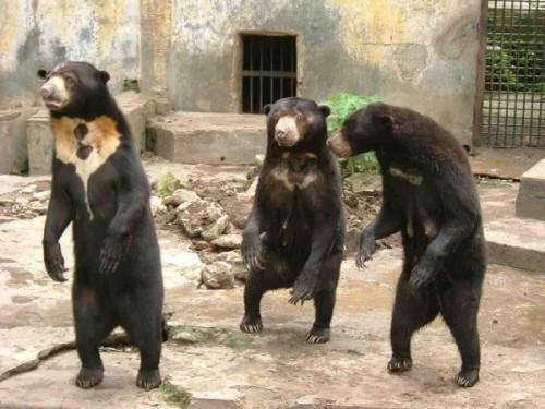дрессировка медведя 2