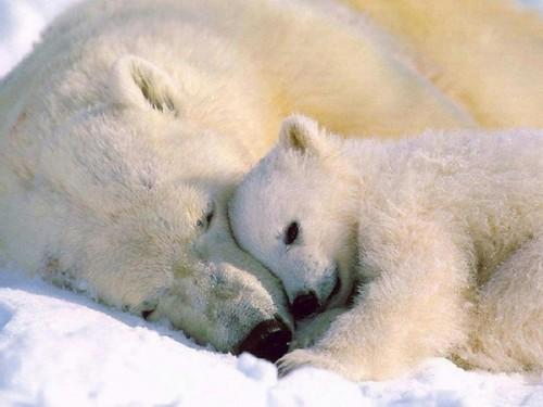 медведь в спячке 2
