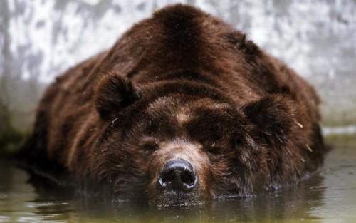 С медведями по жизни 2