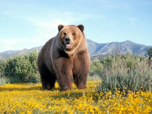 С медведями по жизни 4
