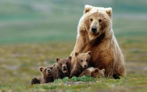 С медведями по жизни 6